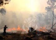 Une plateforme numérique dédiée au programme de réhabilitation des forêts ravagées par les incendies