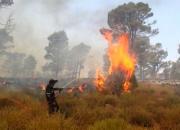 Feux de forêts: l'activité humaine à l'origine de la destruction de plus de 9.000 ha depuis le 1er juin